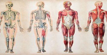 معلومات عن جسم الانسان ستدهشك