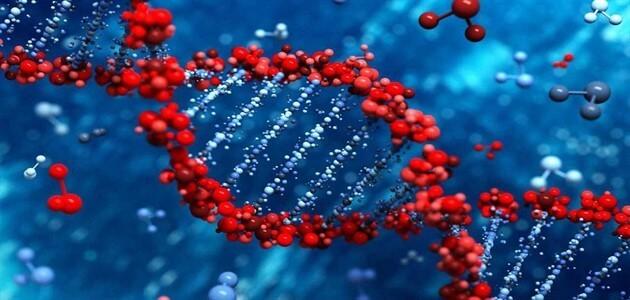 تحليل زواج الأقارب والأمراض الوراثية