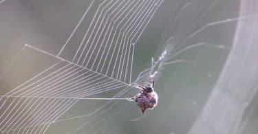 ماذا يسمى بيت النمل والعناكب ؟