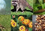بحث عن أخطار تواجه التنوع الحيوي وطرق المحافظة عليه