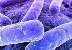 ما هو سبب بكتيريا البول ؟