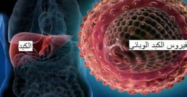ما هو فيروس الكبد ب