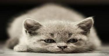 ما هي أعراض موت القطط وأسبابه