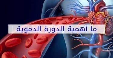ما هي أهمية الدورة الدموية