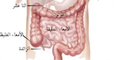 هل القولون هو الأمعاء الغليظة في الجسم