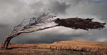 ماذا يسمى صوت الرياح