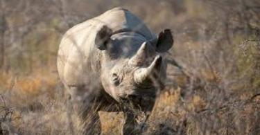 ما الأسم الذي يطلق على وحيد القرن