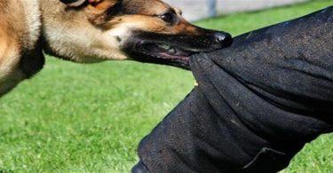 ما هو مصل الكلب واين يوجد