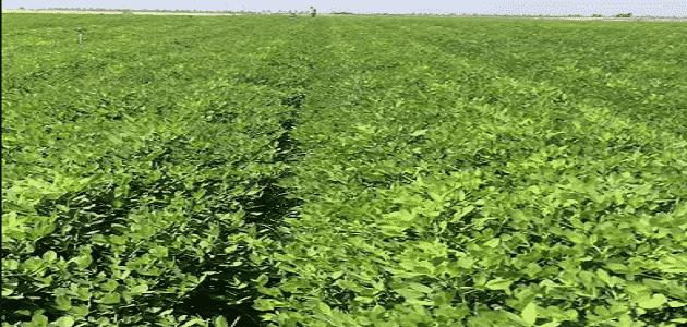 ما هي الزراعات المربحة في مصر