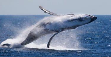 ما هي درجة حرارة بطن الحوت