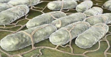مضاد حيوي لعلاج السالمونيلا