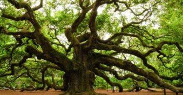 من هي الاشجار دائمة الخضرة في مصر