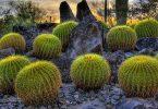 أهم نباتات الإقليم الصحراوي وخصائصها