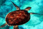بحث حول جهود العلماء في تصنيف الحيوانات