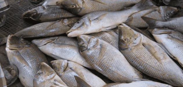 بحث عن الثروة السمكية فى مصر doc