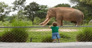 بحث عن ظاهرة بالانقراض وكيفية حمايتها