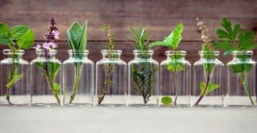 تقرير عن أهمية مستخلصات النباتات التالية في عملية التجميل