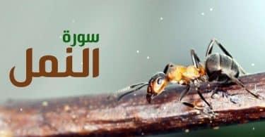 فضل قراءة سورة النمل قبل النوم