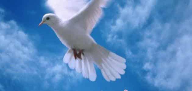 من هو صاحب لوحة حمامة السلام العالمية معلومة ثقافية