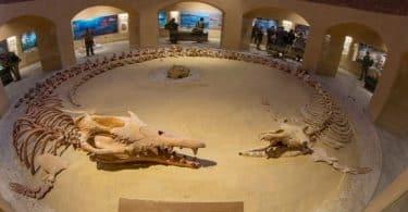 محمية وادي الحيتان