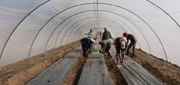 دراسة جدوى مشروع الصوب الزراعية
