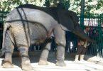 كيفية الوصول إلى حديقة الحيوان بالجيزة بالتفصيل