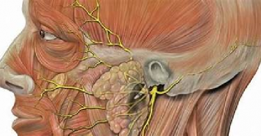 ما هو التهاب العصب الخامس