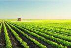 أهم المحاصيل الصيفية المربحة