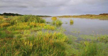 بحث عن العوامل التي تؤدي الى احداث تغيرات في البيئة