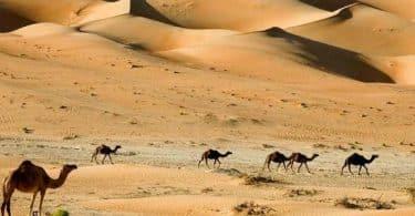 بحث عن دور الروافع في دعم الحياة في البيئة الصحراوية