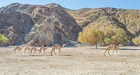 بحث عن محمية وادي الجمال بمرسى علم