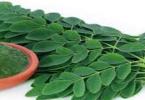 فوائد بذور نبات المورينجا