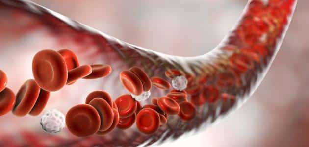 كيفية تنقية الدم من السموم