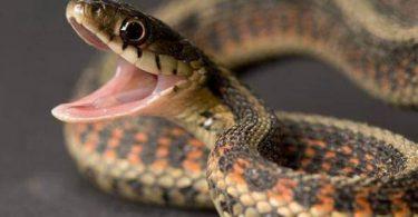 معلومات عن الثعابين في مصر وأنواعها