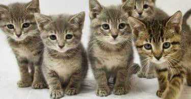 معلومات عن القطط وكيفية التعامل معها