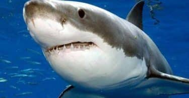 معلومات عن سمك القرش وأنواعها