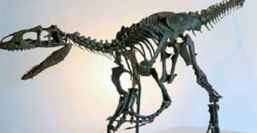 بحث عن الحفريات والانقراض doc