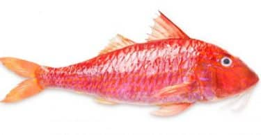فوائد واضرار سمك البربون