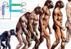 معلومات عامة عن نظرية التطور