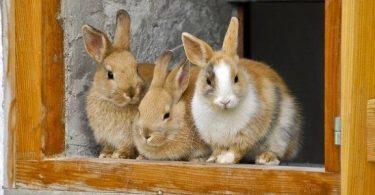 معلومات عن فوائد الأرانب بالتفصيل