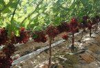 أفضل المحاصيل الصحراوية وكيفية زراعتها