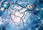 الفرق بين قوة الأعصاب وقوة العضلات