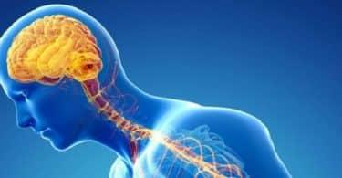 صحة الدماغ والجهاز العصبي