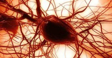 فوائد الخلايا الجذعية للإنسان