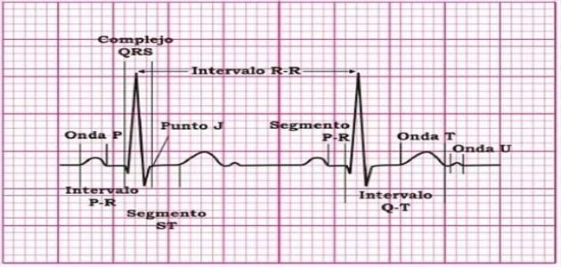 كيفية قراءة رسم القلب بالتفصيل