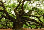 معلومات عامة عن انواع الاشجار