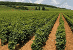معلومات عن المحاصيل الشتوية في الحقل الزراعي