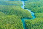 معلومات عن غابات أفريقيا