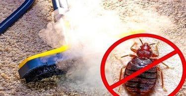 معلومات مرعبة عن حشرة البق