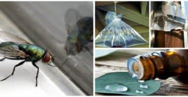 وصفات طبيعية للتخلص من الذباب